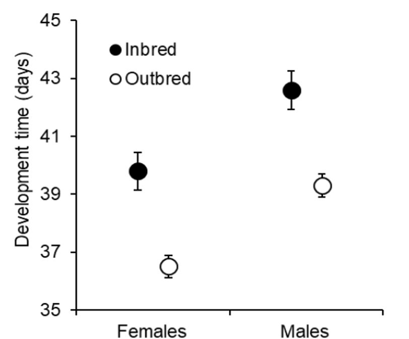 A data figure that shows development time (days), relative to sex for both inbred and outbred crickets. The figure shows that female inbred crickets took about 40 days to develop, and female outbred crickets took about 36 days to develop. It shows that male inbred crickets took about 43 days to develop, and male outbred crickets took about 39 days to develop. Males generally took longer to develop than females.