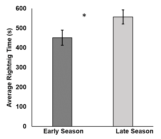 A data figure that shows the time that it takes a hatchling to right itself, relative to the season in which it was born. It shows that turtles born in the early season took about 450 seconds to right themselves. It shows that turtles born in the late season took about 550 seconds to right themselves.