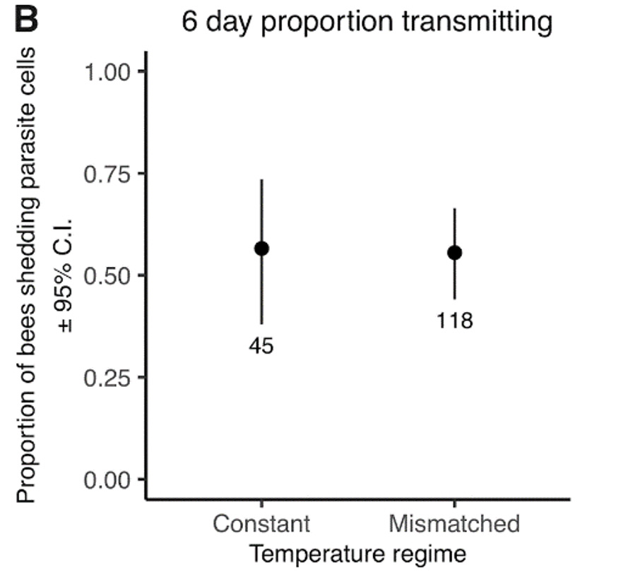 A data figure that shows the proportion of infected bees after 6 days at a given performance temperature. It shows that, at both constant (45 bees total) and mismatched (118 bees total) temperatures, about 50% of bees became infected after 6 days.