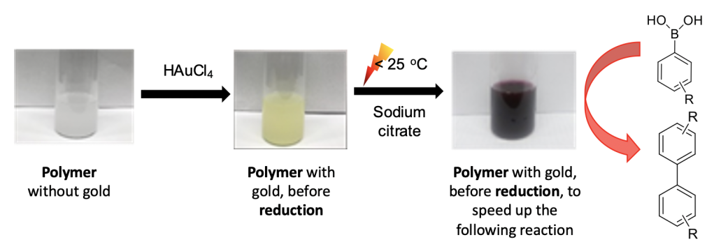 The steps necessary to make the catalyst. It starts with a polymer without gold (opaque white solution), then a chemical compound that contains gold is added to the solution (HAuCl4) to create a polymer with gold (a yellow opaque solution). Then, sodium citrate is added to the solution to create the purple opaque solution from the previous figure. This is the solution that goes into the reaction to create biphenyl.