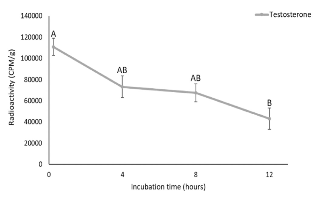 A data figure that shows the amount of radiolabeled testosterone over time. The x-axis shows Incubation Time (hours). The y-axis shows Radioactivity (CPM/g). The figure shows that testosterone is significantly higher at zero hours (it falls between 100,000 and 120,000 CPM/g) than at 12 hours (it falls between 40,000 and 60,000 CPM/g).