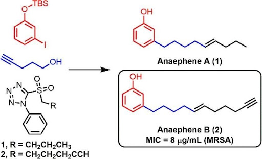 A chemical reaction that ends with Anaephene A and Anaephene B. The figure highlights the MIC of Anaephene B, 8 microgram/mL against MRSA.