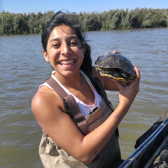 Rosario standing in the water next to a boat, wearing waders. She holds a red-eared slider turtle in her hands and smiles at the camera.